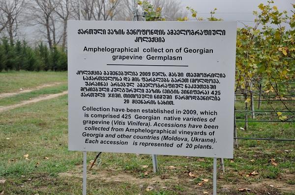 Ampheloograhical collect of Georgia