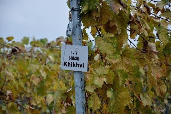 Khikhvi grape