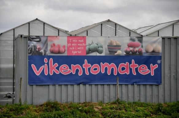 vikentomater (600x395)