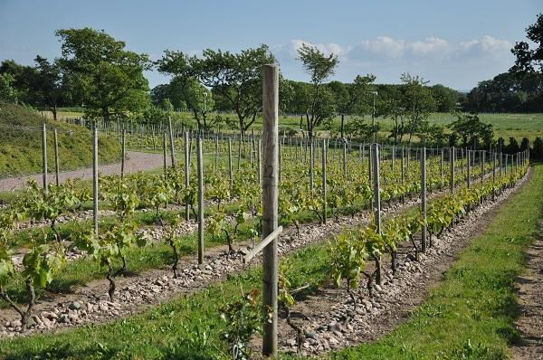 Villa Mathilda vingård
