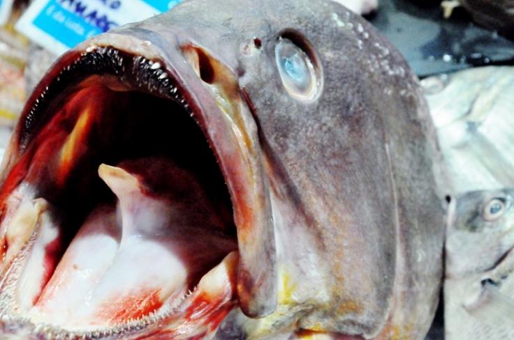 fish 2 (800x531)