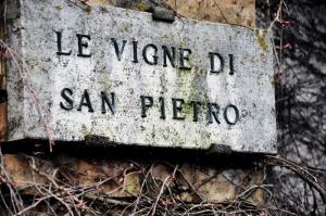 Le Vigne Di San Pietro (800x531)