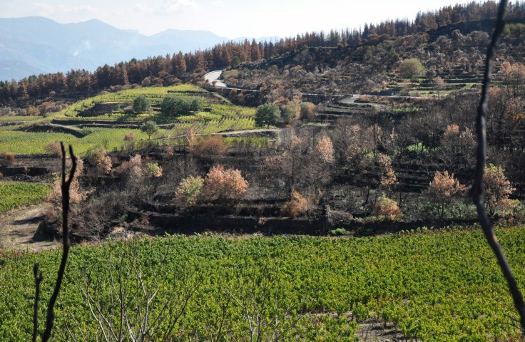 A Vineyard at Etna scorched by lava